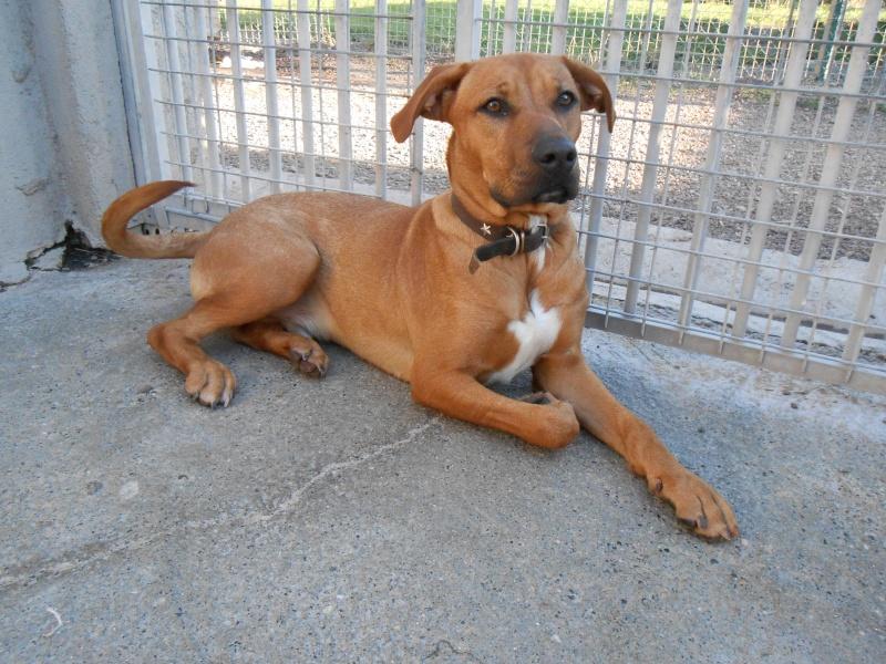 SKY (mâle croisé boxer/labrador) Dscn0432