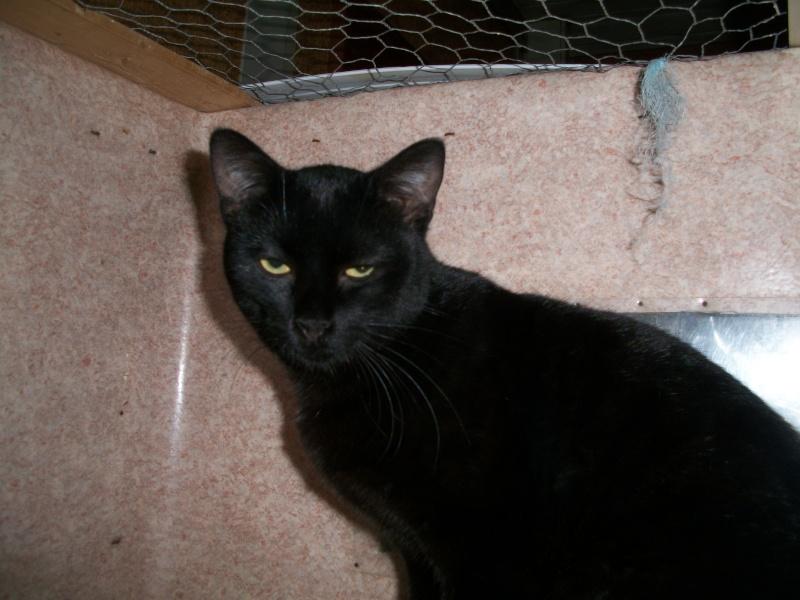 PEPITO (mâle européen noir) Poupet23