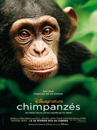 Chimpanzés Chimpa10