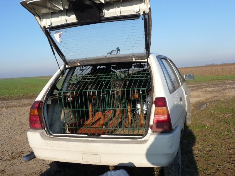 Choix de la cage/caisse de transport - Page 4 Cagep111