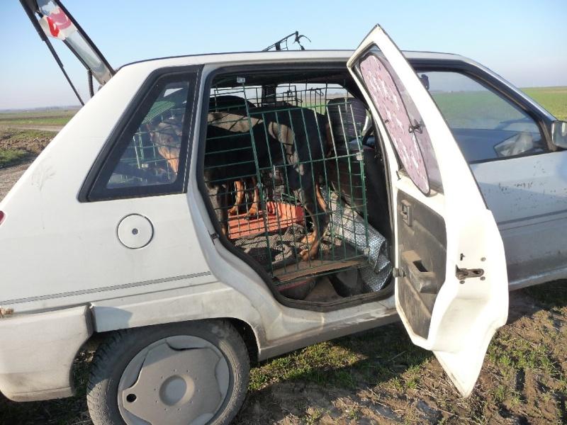 Choix de la cage/caisse de transport - Page 4 Cagep112