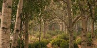 Forêt Verdoyante de Neptune