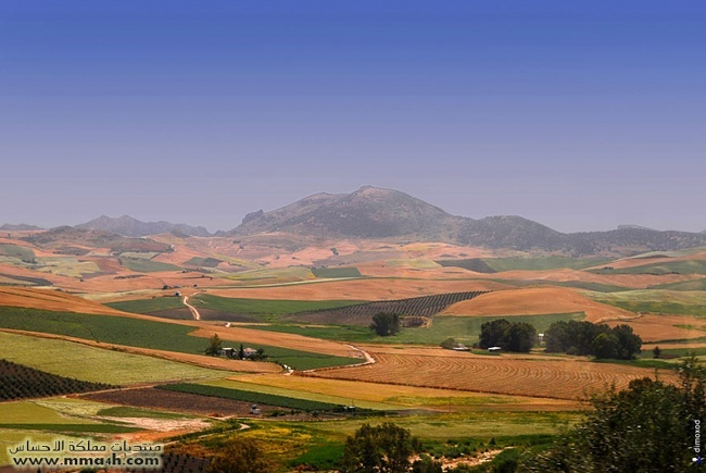 Olvera القرية البيضاء في أسبانيا 610