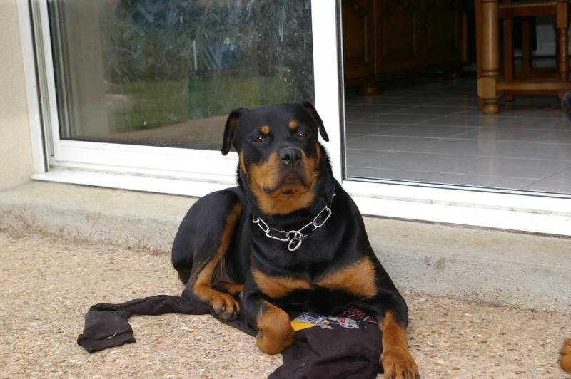 Ancien Concours n°3 C'est un SPECIAL CHIEN EN POSITION COUCHE gagné par Toscane la chienne de Marine Imgp1610