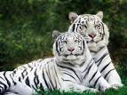 en tatlı hayvan resimleri 9f0hxc10