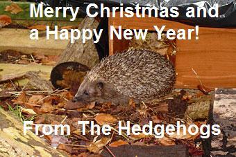 Merry Christmas Hedgehog Photo Conker12
