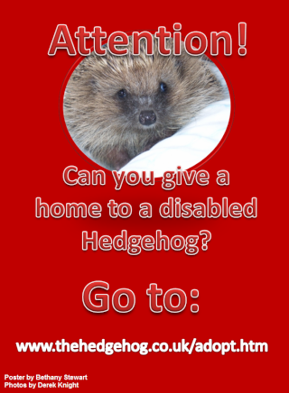 Disabled Hedgehogs Poster Disabl10