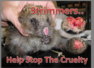 Strimmer Campaign Images Stopth10