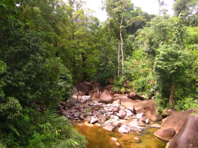 Borneo Tracks: Gunung Piuh Forest Resort Bridge10