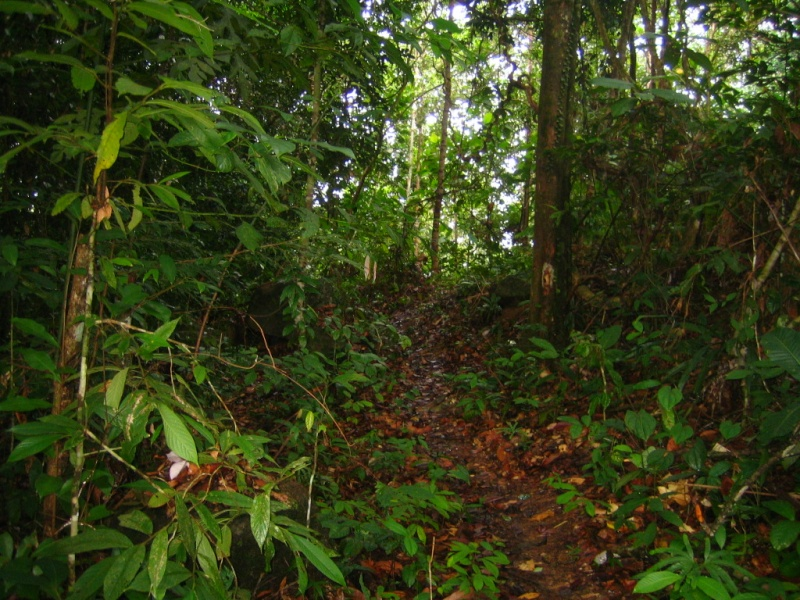 Borneo Tracks: Gunung Piuh Forest Resort Forest10