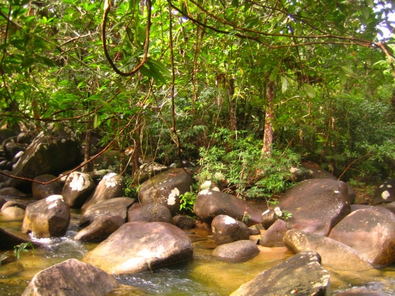 Borneo Tracks: Gunung Piuh Forest Resort River10