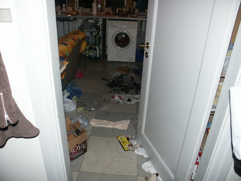 If you are leaving your dog alone - post pics of damages in house Pict0011