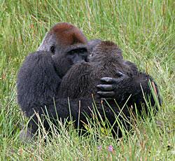 casper  Gorill10