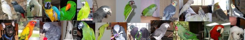 Bird Lovers Back up