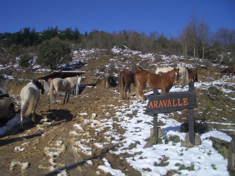 Limpieza y aseo en Aravalle (16-12-08) Imgp1330