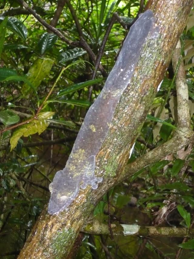 Madagascar P1010211