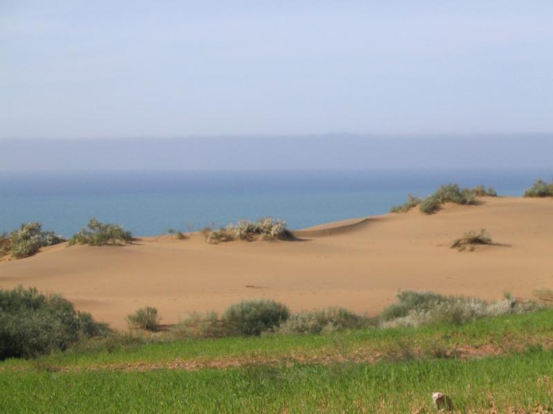 صور منطقة الفنار بقرب من شاطئ الشعايبية (بلدية) بن عبد المالك رمضان Soutze14