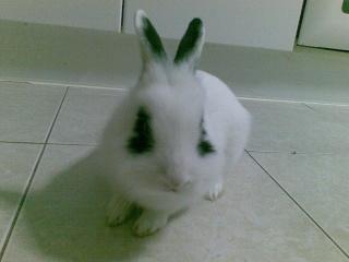 O meu animal de estimação 13122011