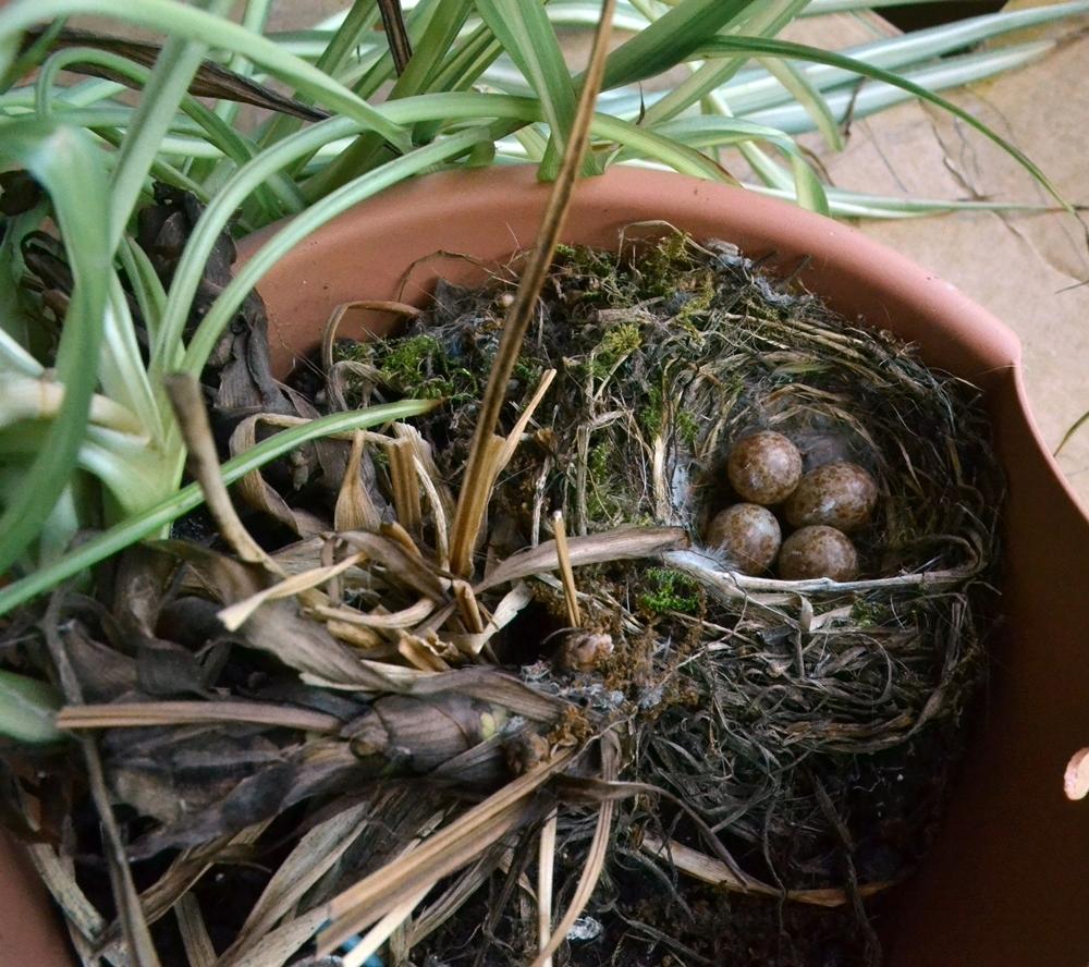 Es vögelt in meinem Garten! - Seite 3 Juni_210