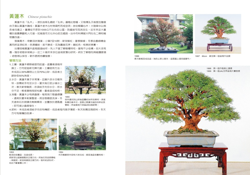 Bonsai story from 1960 to 2010 P24_2510