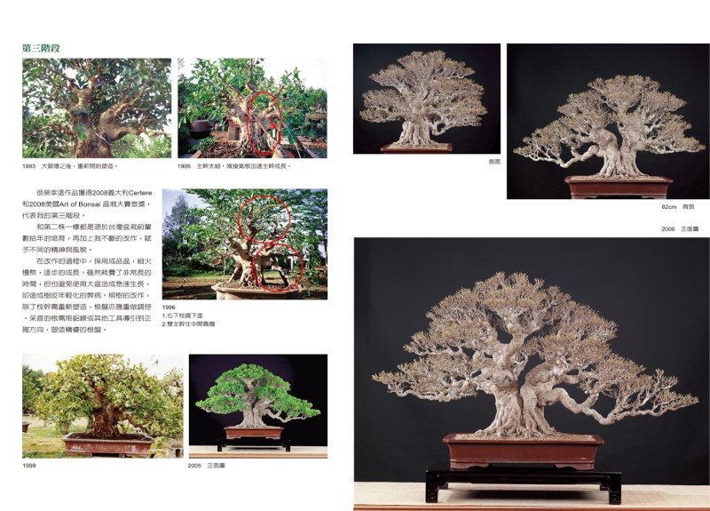 Bonsai story from 1960 to 2010 P40_4110