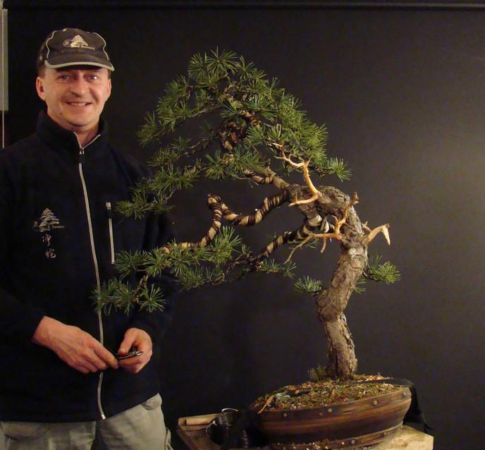 Pinus sylvestris - wider trunk Fin_1010