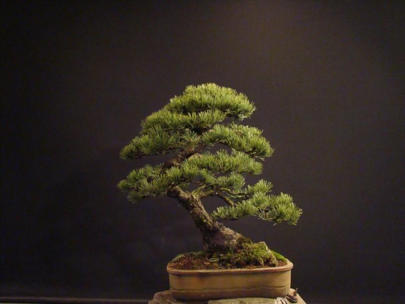 Pinus mugo 2004 - Page 2 Mni_310