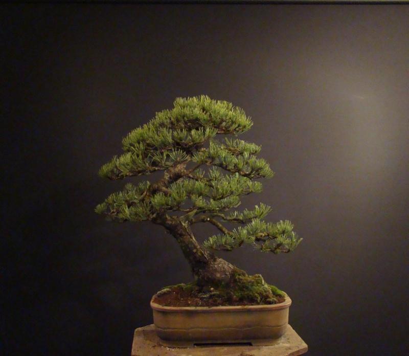 Pinus mugo 2004 - Page 2 Mni_810