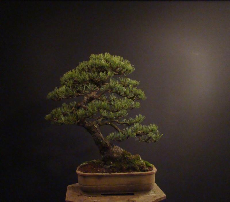 Pinus mugo 2004 - Page 2 Mni_910