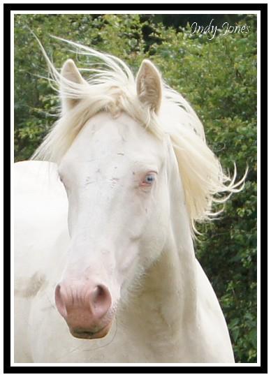 Le Domaine des Merveilles élevage familial d'Irish Cob en Auvergne, nouveau site! 610110