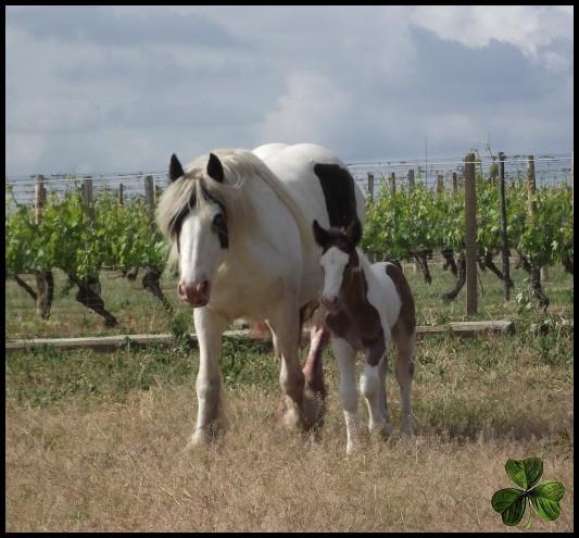 Domaine des Merveilles élevage familial en Auvergne 810110