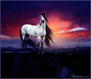 الملكة السمراء - نبيل القدس