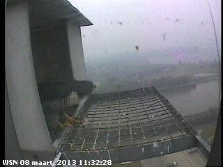 Nijmegen/Centrale Gelderland  Mariken ~ Moenen  2013 Cg210