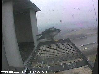 Nijmegen/Centrale Gelderland  Mariken ~ Moenen  2013 Cg211