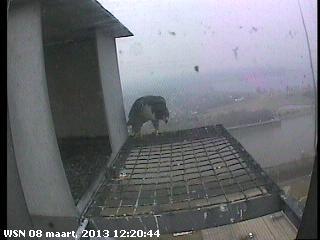 Nijmegen/Centrale Gelderland  Mariken ~ Moenen  2013 Cg212