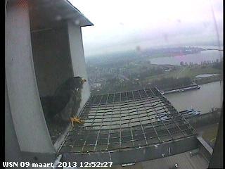 Nijmegen/Centrale Gelderland  Mariken ~ Moenen  2013 Cg214