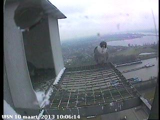 Nijmegen/Centrale Gelderland  Mariken ~ Moenen  2013 Cg215