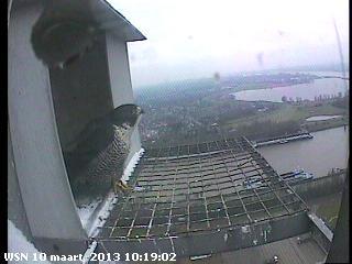 Nijmegen/Centrale Gelderland  Mariken ~ Moenen  2013 Cg216