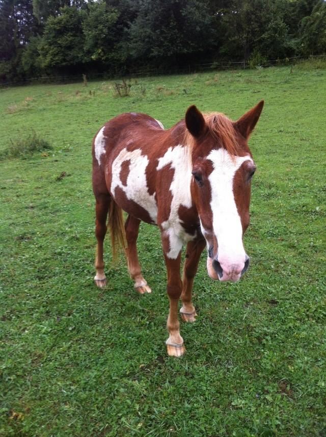 WALANIE (VANILLE) - ONC poney - adoptée en avril 2011 par voulk  - Page 6 Img_3510