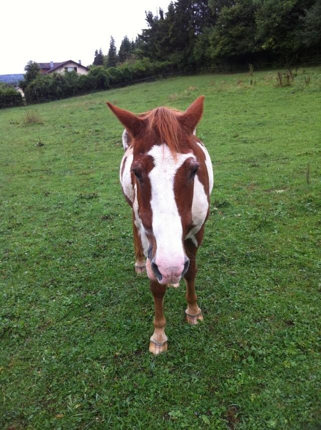 WALANIE (VANILLE) - ONC poney - adoptée en avril 2011 par voulk  - Page 6 Img_3511