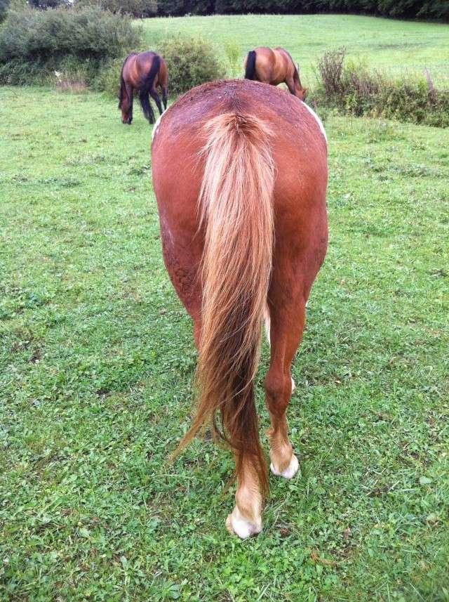WALANIE (VANILLE) - ONC poney - adoptée en avril 2011 par voulk  - Page 5 Img_3513