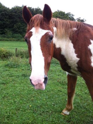 WALANIE (VANILLE) - ONC poney - adoptée en avril 2011 par voulk  - Page 6 Img_3518
