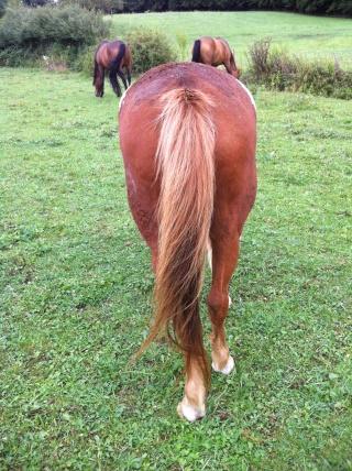 WALANIE (VANILLE) - ONC poney - adoptée en avril 2011 par voulk  - Page 6 Img_3519