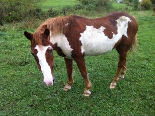 WALANIE (VANILLE) - ONC poney - adoptée en avril 2011 par voulk  - Page 6 Img_3520