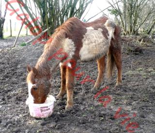 WALANIE (VANILLE) - ONC poney - adoptée en avril 2011 par voulk  - Page 6 Walani10