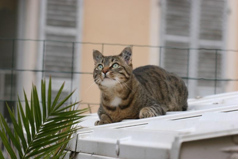 adoptée  Thelma chatte tigrée et sa chatonne 04/06 Chats_10