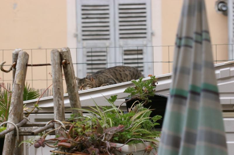 adoptée  Thelma chatte tigrée et sa chatonne 04/06 Chats_12