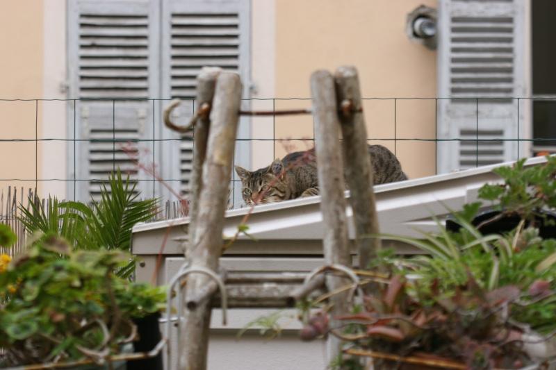 adoptée  Thelma chatte tigrée et sa chatonne 04/06 Chats_13