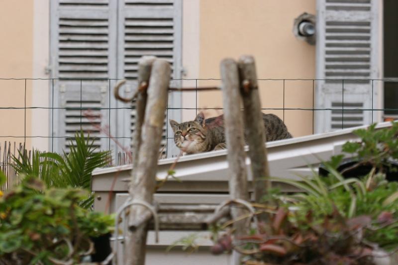 adoptée  Thelma chatte tigrée et sa chatonne 04/06 Chats_14