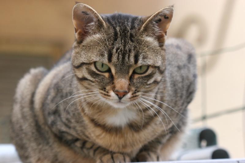adoptée  Thelma chatte tigrée et sa chatonne 04/06 Chats_17